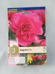 BEGONIA DOUBLE PINK X3