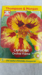 CAPUCINE ORCHID FLAME